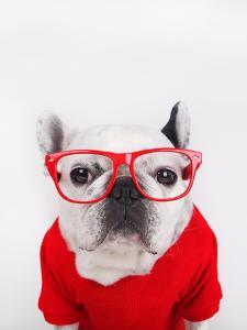 Dog with Eyeglasses by retales botijero