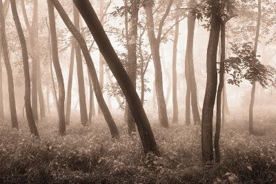 Reticent Woods-Igor Svibilsky-Photographic Print