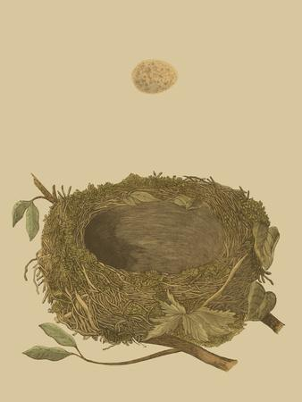Antique Nest and Egg I