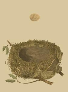 Antique Nest and Egg I by Reverend Francis O^ Morris