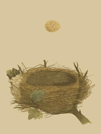 Antique Nest and Egg II