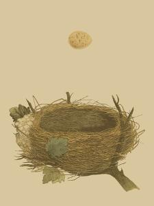 Antique Nest and Egg II by Reverend Francis O. Morris