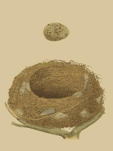 Antique Nest and Egg IV by Reverend Francis O. Morris