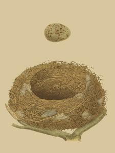 Antique Nest and Egg IV by Reverend Francis O. Morris