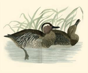 Morris Ducks II by Reverend Francis O^ Morris
