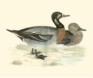 Morris Ducks III by Reverend Francis O^ Morris