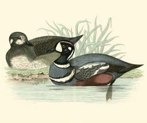 Morris Ducks IV by Reverend Francis O^ Morris