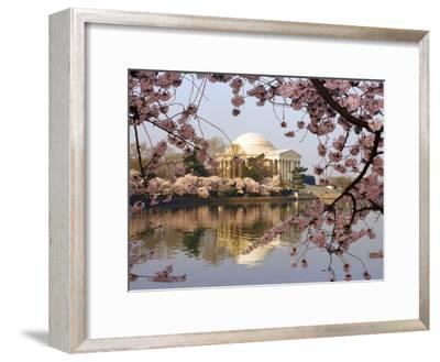Cherry Blossoms Frame the Jefferson Memorial Across the Tidal Basin