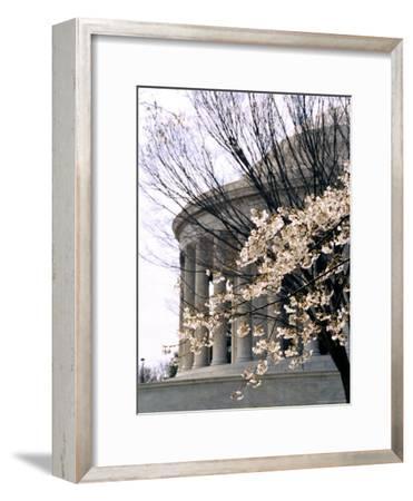 Cherry Blossoms Frame the Jefferson Memorial
