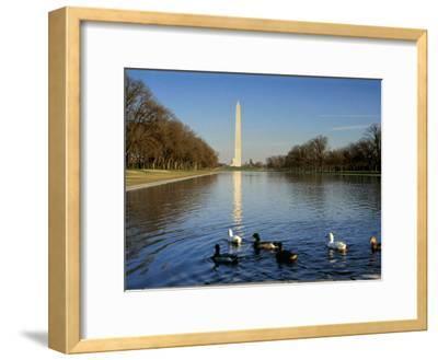 Ducks Swim in the Reflection of the Washington Monument