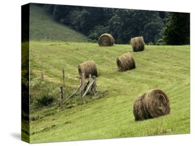 Rolls of Cut Hay Dot a Field on a North Carolina Farm