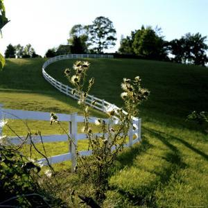 White Plank Fence Borders a Pasture by Rex Stucky