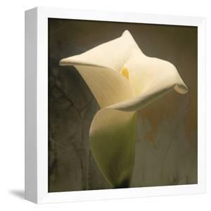 Calla Lily (Zantedeschia Aethiopica), Spring, Oregon, North America by Reynolds Trish