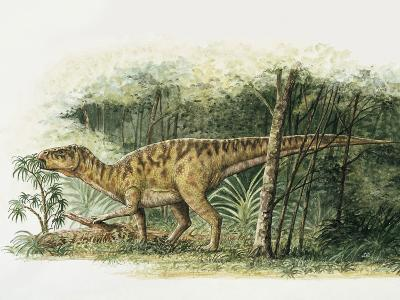 Rhabdodon Dinosaur Eating Plants in the Forest--Photographic Print