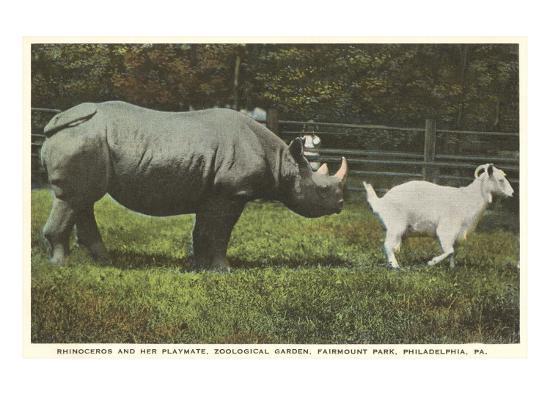 Rhino and Goat, Zoo, Philadelphia, Pennsylvania--Art Print