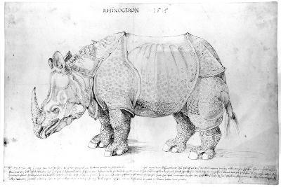 Rhinoceros, 1515-Albrecht D?rer-Giclee Print