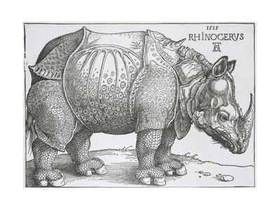 https://imgc.artprintimages.com/img/print/rhinoceros-1515_u-l-q12nspt0.jpg?p=0