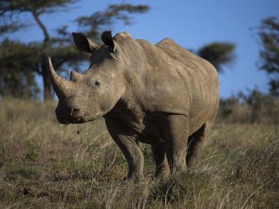 Rhinoceros in Samburu National Reserve-Michael Nichols-Photographic Print