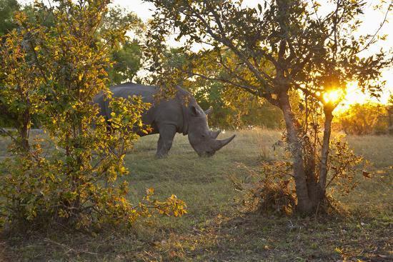 Rhinoceros in the Mosi-O-Tunya National Park-Maremagnum-Photographic Print