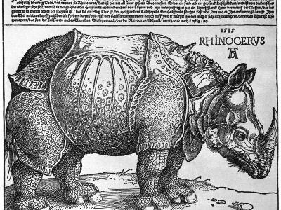 Rhinoceros, Print Given to Maximilian I by the King of Lisbon, 1515-Albrecht Durer-Giclee Print