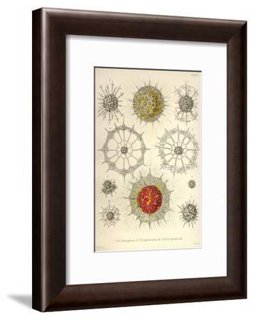 Rhizosphaera, R. Trigonacantha, R. Leptomita-Ernst Haeckel-Framed Art Print