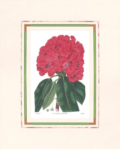 Rhododendron I--Art Print
