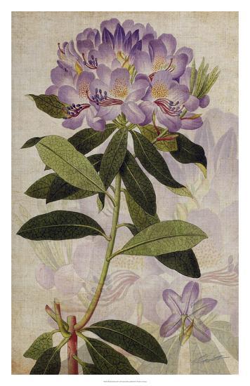 Rhododendron II-John Butler-Giclee Print