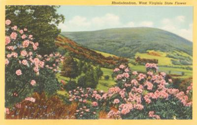 Rhododendron, State Flower of West Virginia