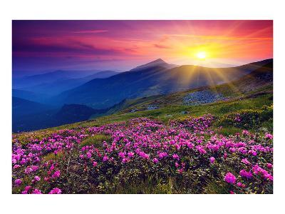 Rhododendron & Summer Mountain--Art Print