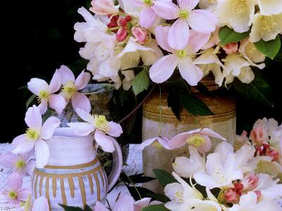 """Rhododendron Yak Hybrid """"Golden Torch"""" and Pink Clematis Montana (Travellers Joy)-James Guilliam-Photographic Print"""