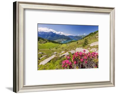 Rhododendrons on Monte Berlinghera with Alpe di Mezzo and Alpe Pesceda, Sondrio province-Roberto Moiola-Framed Photographic Print