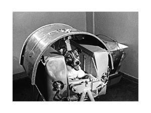 Laika the Space Dog by Ria Novosti