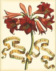 Ribbon Florals II