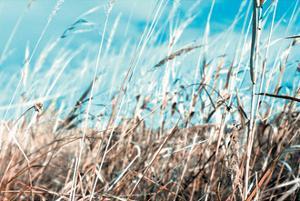 Grass and Reeds 4482 by Rica Belna