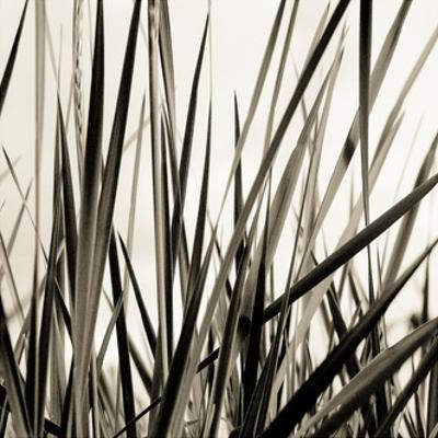 Grass and Reeds by Rica Belna