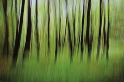 Mystic Forest 0921 by Rica Belna