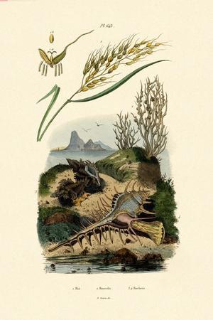 Rice, 1833-39--Giclee Print