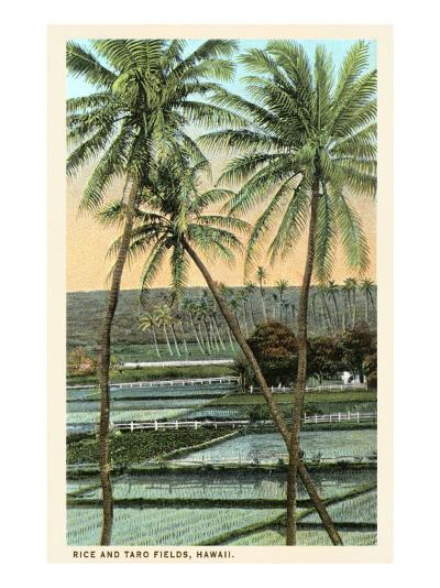 Rice and Taro Fields, Hawaii--Art Print
