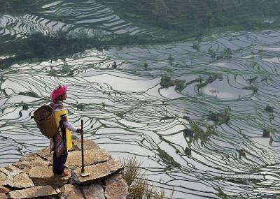 Rice Fields with Water, Yi Woman-Bruno Morandi-Art Print