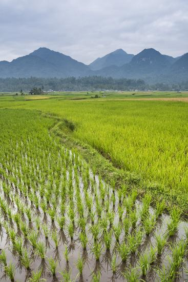 Rice Paddy Fields, Bukittinggi, West Sumatra, Indonesia, Southeast Asia, Asia-Matthew Williams-Ellis-Photographic Print