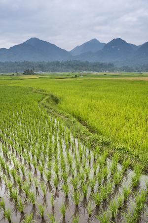 https://imgc.artprintimages.com/img/print/rice-paddy-fields-bukittinggi-west-sumatra-indonesia-southeast-asia-asia_u-l-q12ssxn0.jpg?p=0