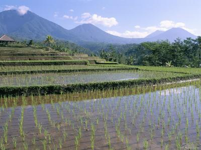 Rice Paddy Fields in Centre of the Island, Bali, Indonesia, Southeast Asia-Bruno Morandi-Photographic Print