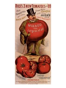 Rice's Tomato Seeds, Mikado, c.1889
