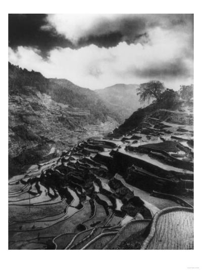 Rice Terraces in the Philippines Photograph - Philippines-Lantern Press-Art Print