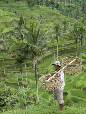 Rice Terraces Near Tegallalang Village, Bali, Indonesia, Southeast Asia, Asia-Richard Maschmeyer-Photographic Print