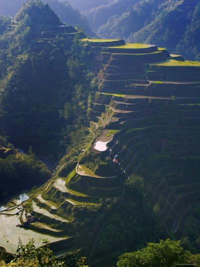 Rice Terraces of Banaue, Luzon Island, Philippines-Michele Falzone-Photographic Print