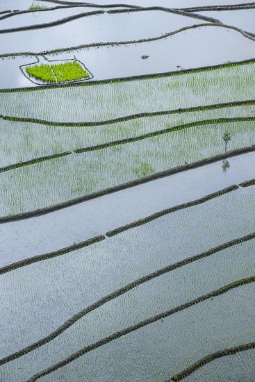 Rice Terraces of Banaue, Northern Luzon, Philippines-Michael Runkel-Photographic Print