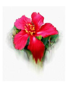 Hibiscus Flower by Rich LaPenna