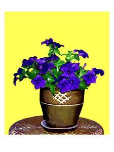 Petunia Against Yellow Background by Rich LaPenna
