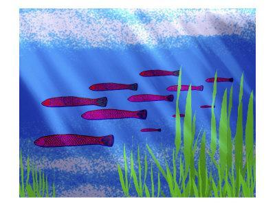 Purple Fish in Calm Blue Water with Seagrass